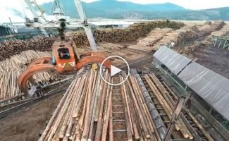 Впечатляющий автоматизированный процесс обработки древесины
