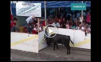 Жестокие подборки с быками (жесть)