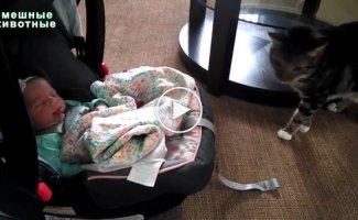 Коты впервые видят младенцев