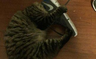 Кошки и обувь (21фото)