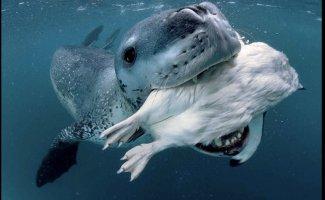 Фото животных под водой (10фото)