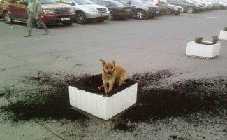 12 собак, которые ведут себя ОЧЕНЬ плохо (12фото)