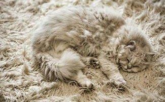 Эти милашки из мира животных замаскировались так, что их сложно разглядеть! (7фото)