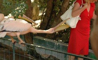 Эти прикольные обитатели зоопарков (28фото)