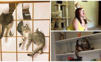 30 фотографий котов-скотов (29фото+2гиф)