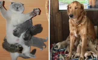 33 фотографии животных о том, каково это - быть матерью (34фото)