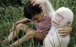 Белоснежные красавцы (35фото)