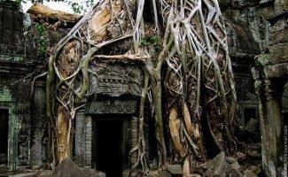 Эти величественные деревья показывают всему миру, кто здесь главный (11фото)