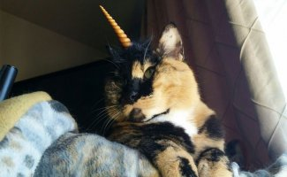 Котики-косплееры захватывают интернет своими очаровательными костюмами (19фото)