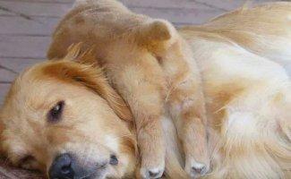 10 фотографий о том, что животным тоже тяжело быть родителями (10фото)