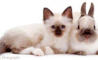 Очаровательные звери —очень похожие, но не родственники (45фото)