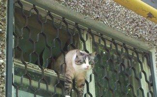 Выглядывающие коты (21фото)