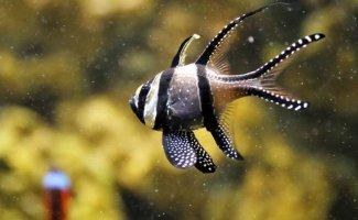18 рыбок, от красоты которых захватывает дух (18фото)