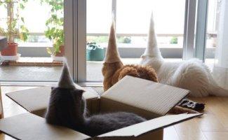 Уморительные кошки в валяных шапках (13фото)
