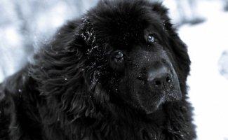 10 самых дружелюбных пород собак (10фото)