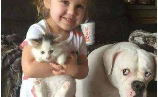 Фото обиженной собаки вызвало бурю сочувствия и негодования (20фото)