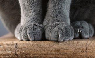 Кошачьи лапки (23фото)
