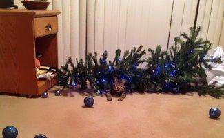 Миссия выполнена! Коты против новогодних ёлок (12фото)