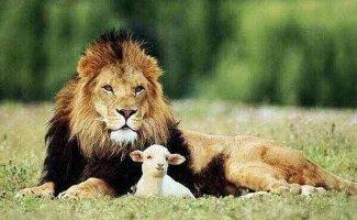 Животные, которых усыновили животные других видов (18фото)