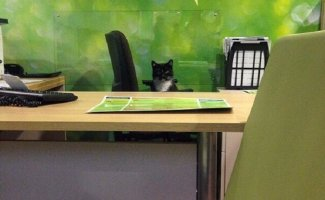 20 неожиданных мест, где котов не ждали, но они появились (17фото)