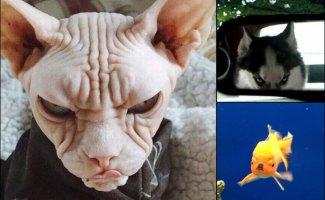 10 настолько злых животных, что они сейчас цапнут тебя зубами через экран (11фото)