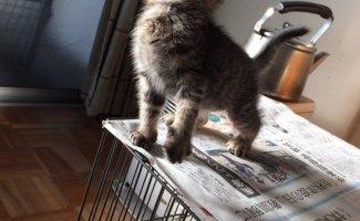 Почему я не очень люблю котов (37фото)