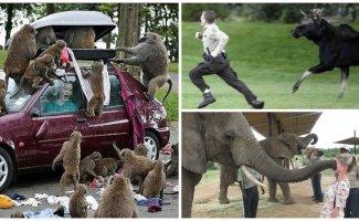 Вы подошли слишком близко: забавные встречи любознательных животных с туристами (18фото)