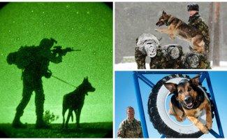Служебные собаки: четвероногие храбрецы (26фото)
