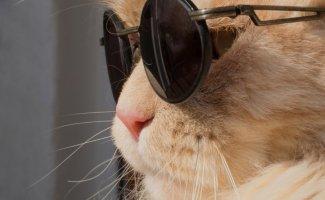 Коты на стиле (22фото)
