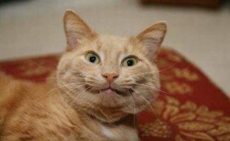 Улыбающиеся коты (29фото)