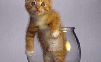 Кошки — это жидкость, есть доказательства (20фото)