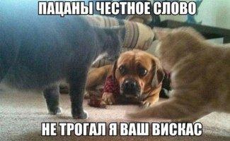 Зверский юмор (32фото)