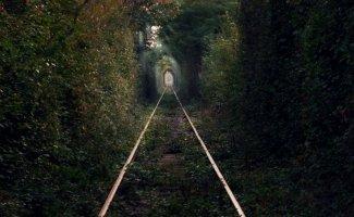 Зелёные тоннели (40фото)