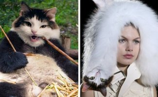 Оскар и Майя - кошки, которых любит фотошоп (27фото)