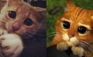 Эти глаза напротив (30фото)