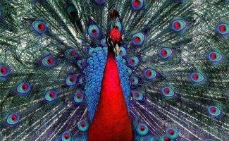 Красота спасет мир или самые красивые птицы мира (17фото)