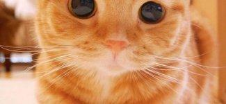 Подборка милых кошечек и котиков) (29фото)