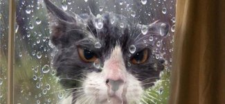 Смешные коты (17фото)