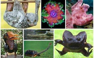 20 невероятно странных животных нашей планеты (22фото)
