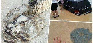 20 чумовых находок, которые люди случайно обнаружили на пляже (18фото)