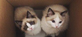 Кошачий фотопозитив (18фото)