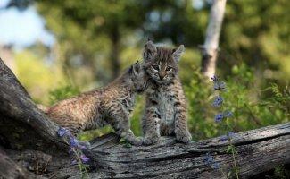 Самые необычные и самые лучшие фото моделей- животных (21фото)