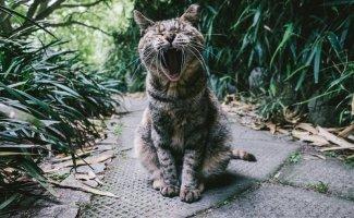 Очень колоритные уличные коты (32фото)
