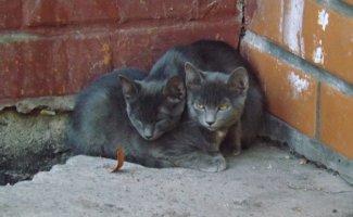 Немного котиков (30фото+1видео)