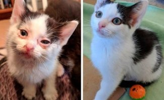 Чудесное преображение животных до и после того, как добрые люди подобрали их на улице (14фото)