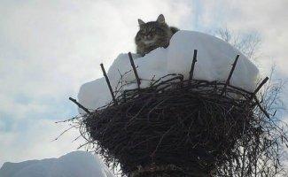 Весна пришла — коты прилетели! (19фото)