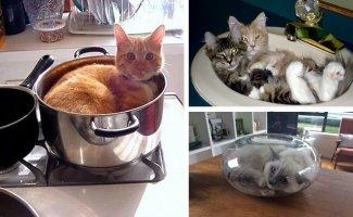 Коты, которых можно налить в любую емкость (24фото)