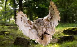 Замечательные фотографии с совами и филинами (22фото)