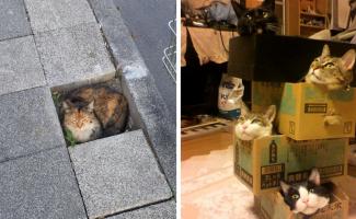Эти кошки могут залезть куда угодно! (41фото)