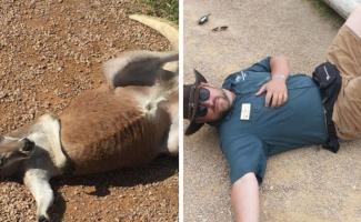 Как развлекаются смотрители зоопарка в свободное время? (17фото)